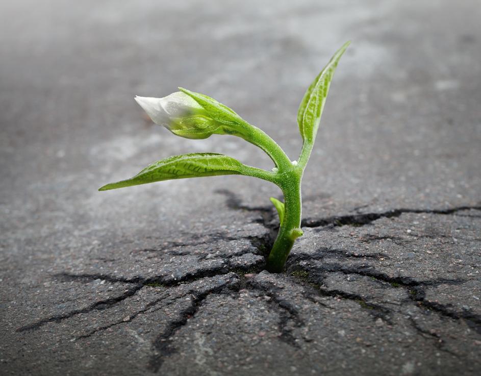 Ik word gek van de prestatiecultuur, maar hoe kan ik dan toch groeien?