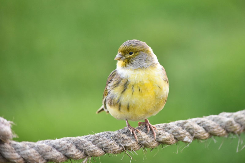 Heb jij al gele kanaries in je organisatie?